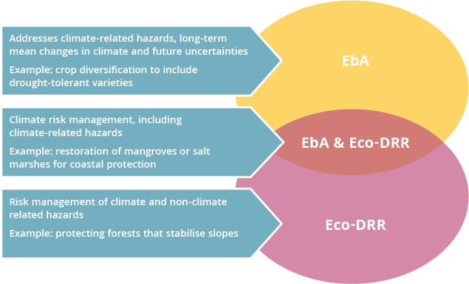 Linkages between EbA and Eco-DRR